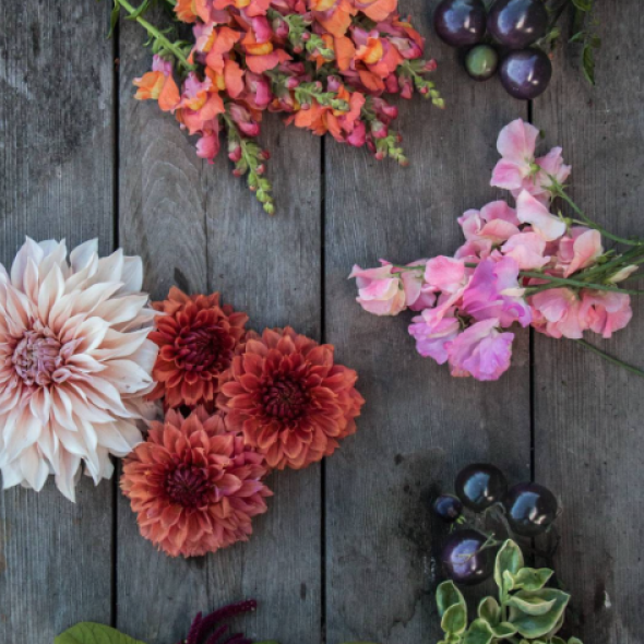 Farm to Vase Floral Workshop at Birchwood Meadows