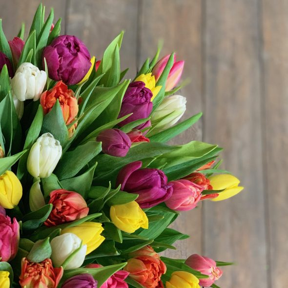 SPRING TULIP BUNDLE for EASTER