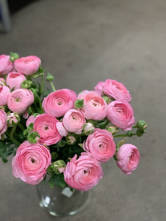 3 – WEEK RANUNCULUS SUBSCRIPTION