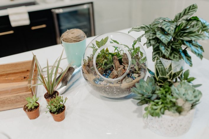 Glass Sphere Terrarium