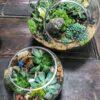 cc-succulent-terrariums-1