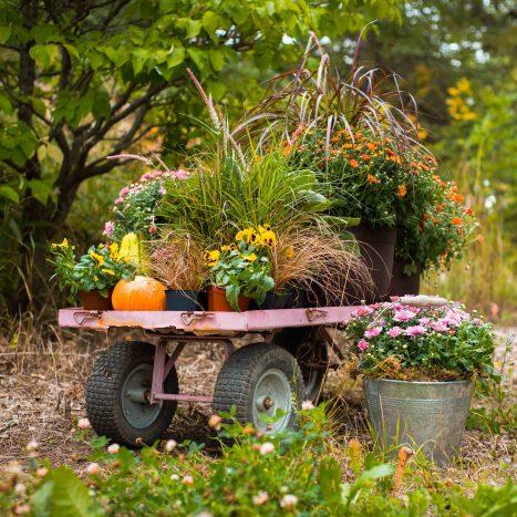 CC Autumn Garden Party